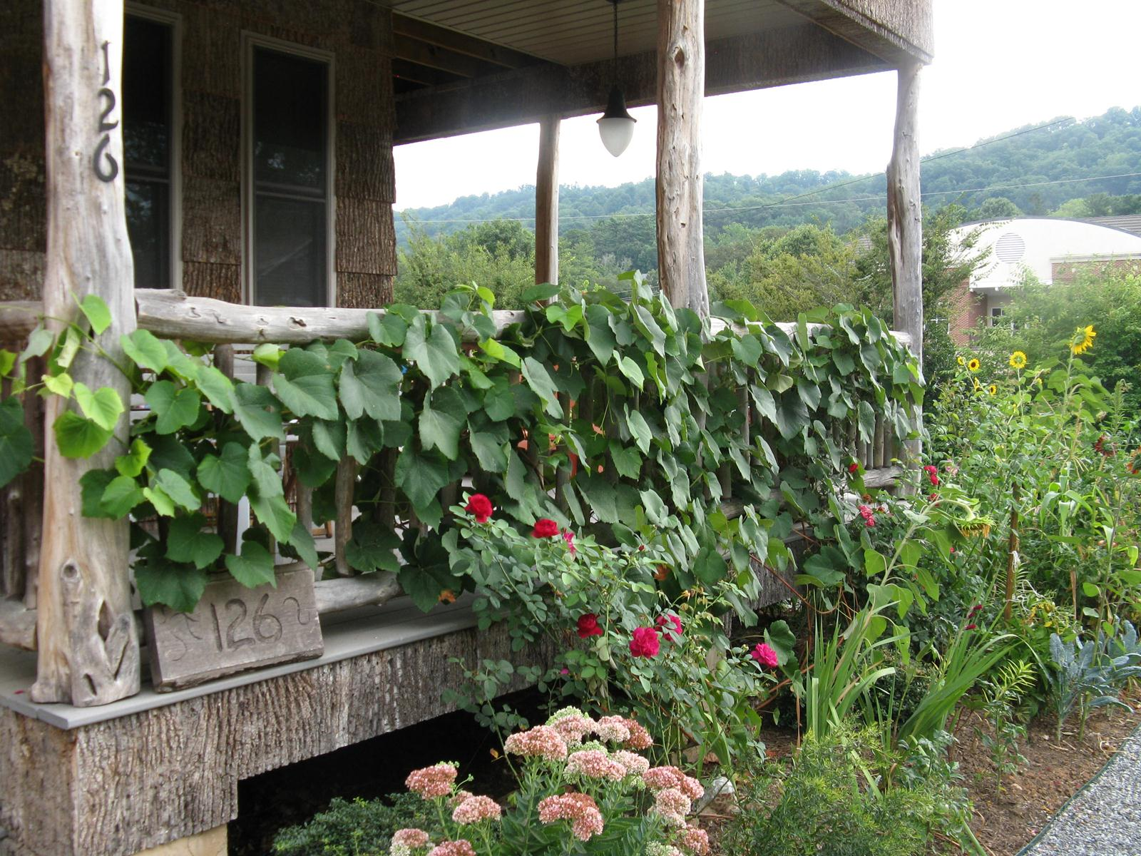 Какие растения можно сажать рядом с виноградом